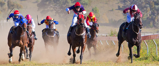 Horses on the straight - courtesy of flagstaffotos